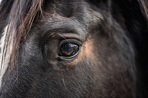Claudia Schmidt Pferde-Blutegeltherapie-2