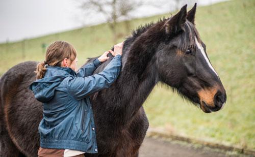 Claudia Schmidt Pferde-Physiotherapie-1