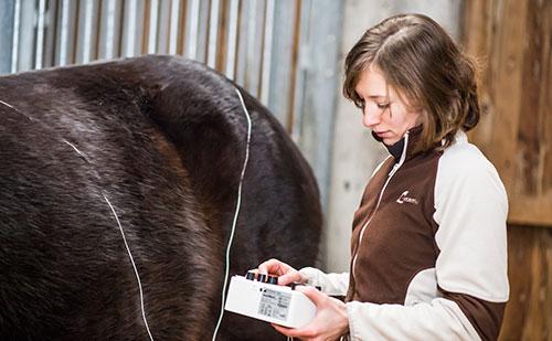 Claudia Schmidt Pferde-Physiotherapie-2
